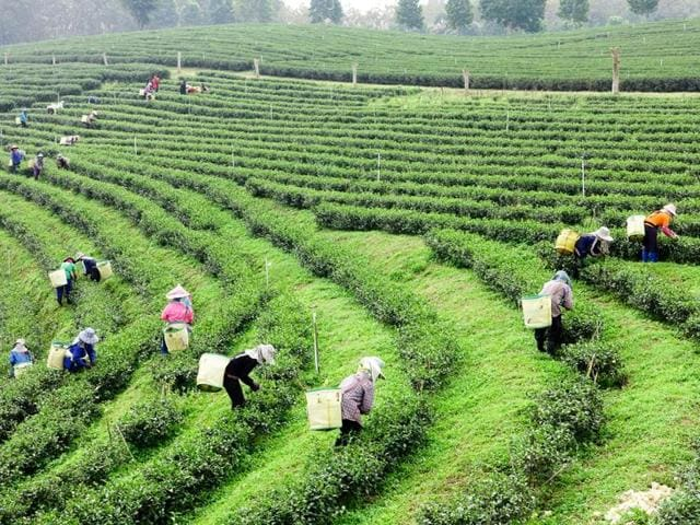 Assam: Farmers baton-charged for protesting auction of