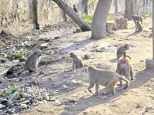The census reports 1,683 sightings of monkeys (Macaca speciosa) in Modi Nagar and 3,658 in the Ghaziabad range.