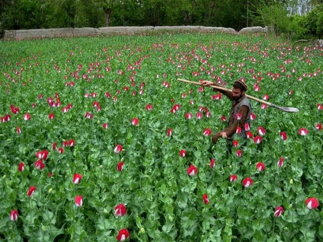 Myanmar police on Sunday torched drugs with a street value of nearly $60 million, as authorities struggle to tackle the scourge of poppy cultivation and shut down pill laboratories in lawless border zones.