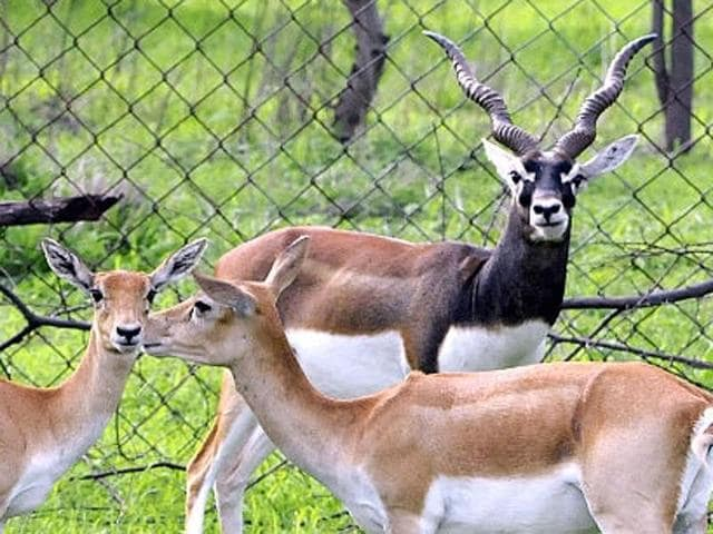 Abohar is known to be home to the black buck too.