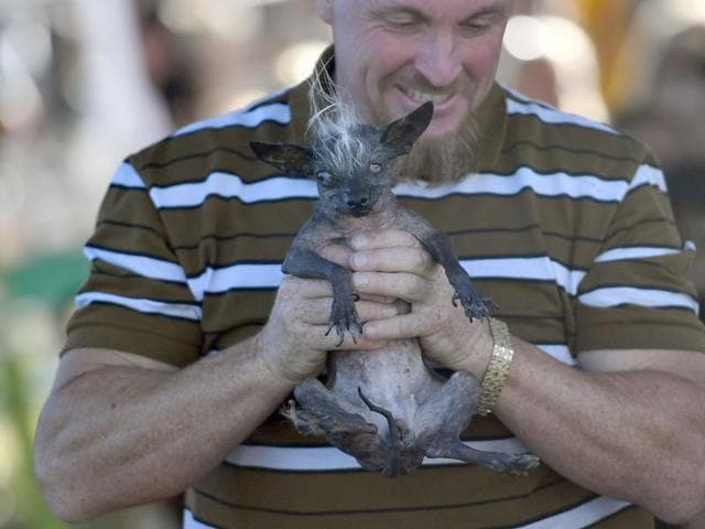 Jason Wurtz of Van Nuys, California, holds his dog Sweepee Rambo after winning the 2016 World's Ugliest Dog contest at the Sonoma-Marin Fair.