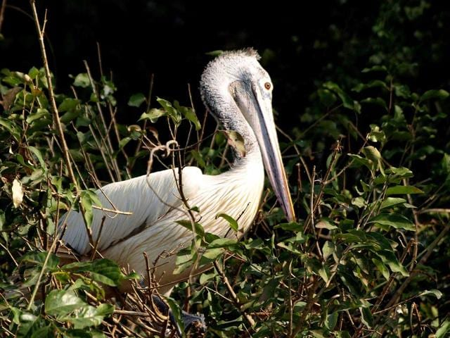 On the occasion of completing a century of research and publication, ZSI has compiled images and information about these species into a book called '100 years of ZSI,' that union environment minister Prakash Javadekar is slated to release on July 1.