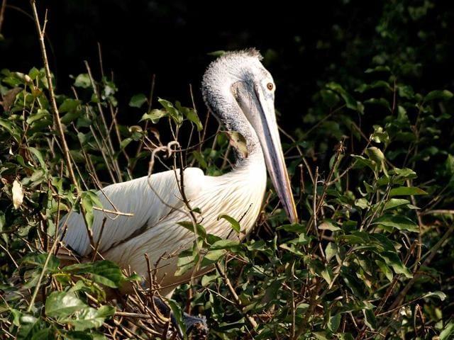 Zoological Survey of India,Prakash Javadekar,faunal species in India