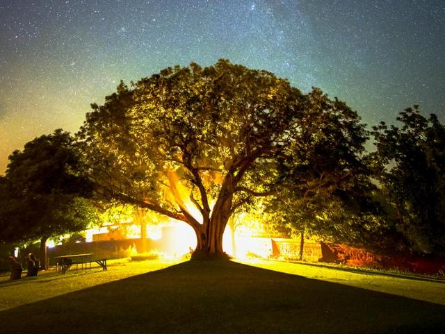 Shooting stars through lens: A photgrapher captures some stunning nights