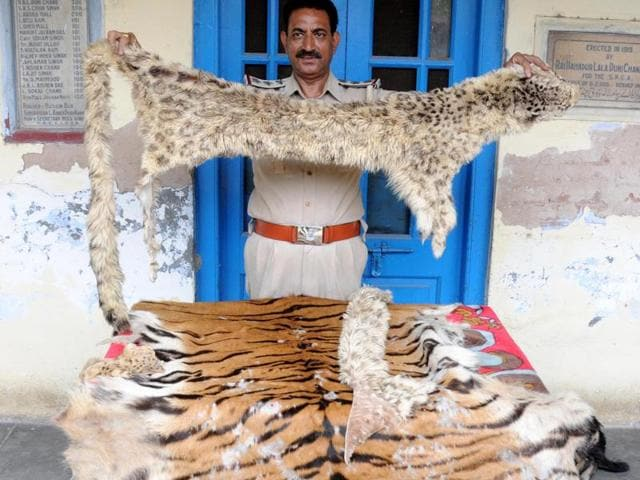 The SPCA team conducted a raid at Ranjit Avenue and found the skin of a tiger and a leopard.(HT Photo)