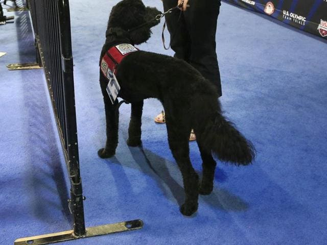 Rio Olympics,US swimmers,Theraphy dogs