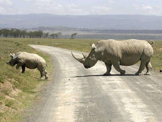 Rhino,Assam,Orang National Park