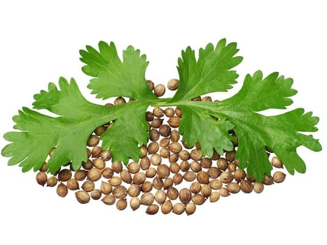 Coriander refers to seeds and leaves. Cilantro is American term for the leaf of the coriander plant