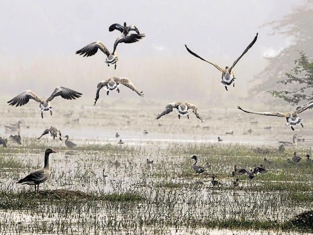 Environmentalists fear that rampant construction activity around the wetland will lead to habitat loss.