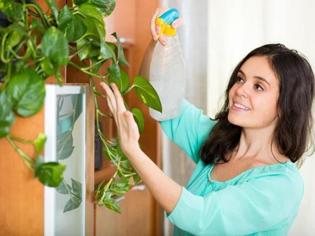 Mind,Indoor plants,Home decor
