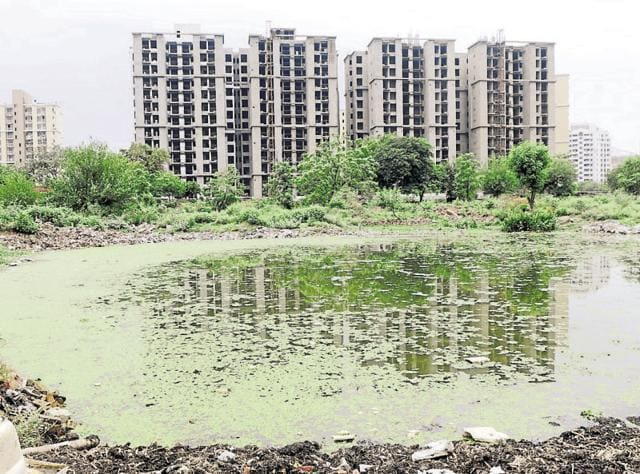 The Sector 47 pond is still in shambles, covered with green algae.