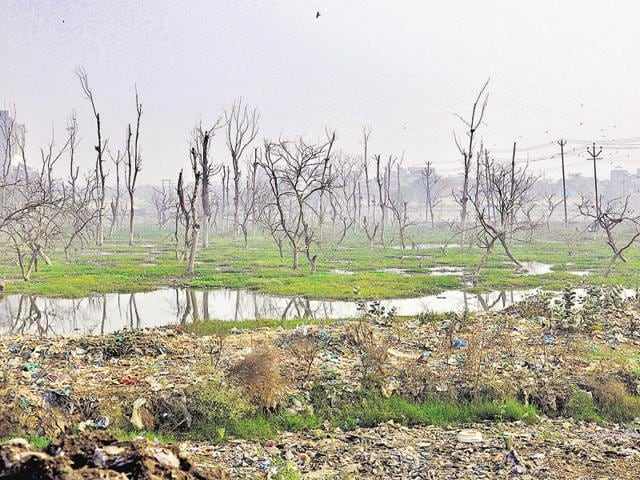 The environment ministry claims to have carried out plantation on 19.64 million hectare (ha) under various government schemes between 2003 and 2014. But the corresponding increase in forest cover was only 2.4 million ha.(Sakib Ali/HT File Photo)