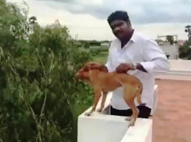 A still from the video that showed a man throwing a dog off a five-storey building in Chennai.