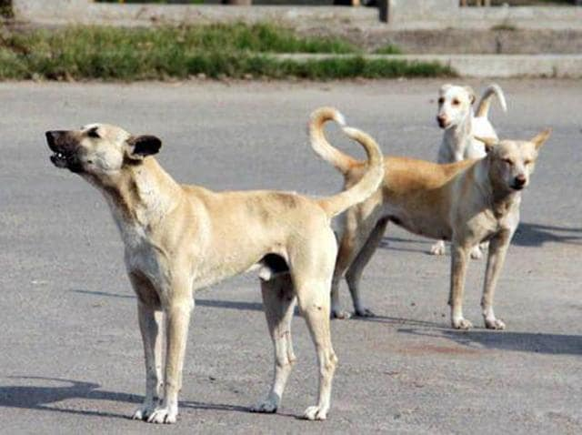 An estimated 25 million stray dogs prowl public spaces in the country and their population still growing.