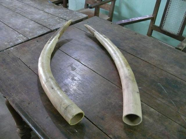 Hunters become the hunted: Elephant poachers fall prey to their phone calls