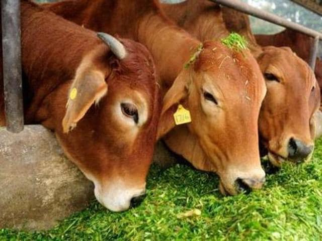 Haryana Gau Sewa Ayog has proposed the government to levy Rs.2,100 on booking of banquet hall, 5 percent cess on collection of entertainment tax, Re 1 per bag of foodgrain and sought 50 per cent collections of donations from state-managed temples for creation of funds for the upkeep of cows in the state