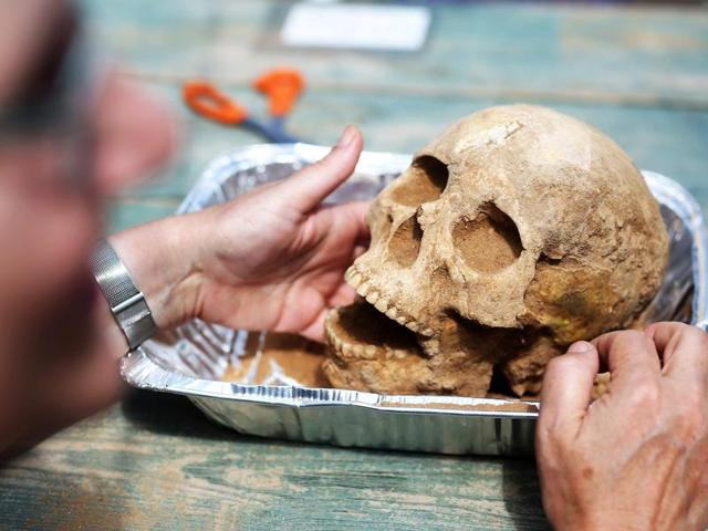 US anthropologist and pathologist, Sherry Fox shows a skull discovered at the excavation site of the first Philistine cemetery ever found on June 28, 2016 in Ashkelon.