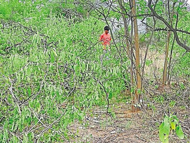 Tribals kill forest guard in Shivpuri,forest guard murder in Shivpuri,Shivpuri