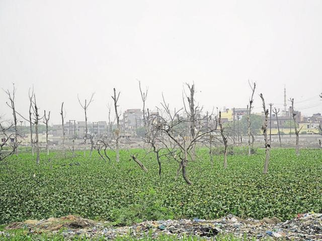 Despite regular plantation drives, data shows that the forest cover of Ghaziabad district has shrunk from 116 sq km in 2001 to 49 sq km in 2015.
