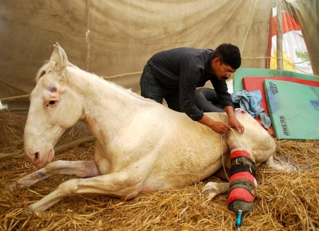 Shaktiman had injuries sustained during a BJP protest in March. A BJP MLA arrested in connection with the incident.