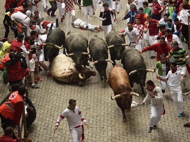 Revelers run in front of Miura fighting bulls on entering the bullring during the last running of the bulls.