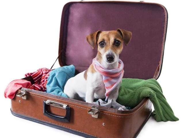 Dogs in check-in luggage