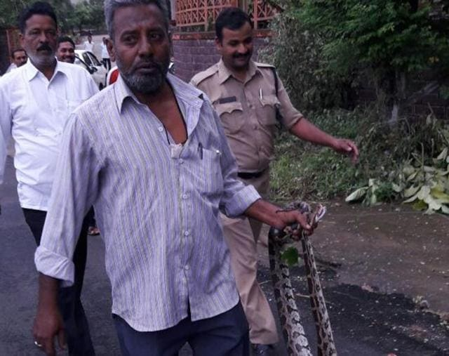 Snake catcher Shahid Ali coming out of union minister Uma Bharti`s house with the python in Bhopal on Sunday.