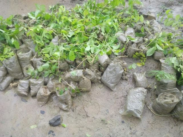 Besides uprooting 3,000 saplings, 2,000 saplings kept for plantation were also destroyed in the Aravallis.