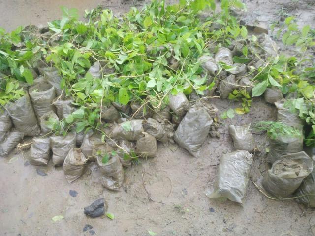 Ravalli protected zone,Saplings uprooted,Save the Aravallis
