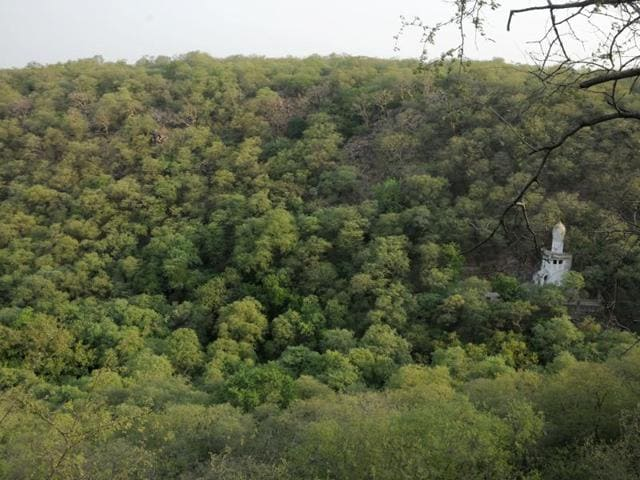 "The forest department now plans to adopt the natural regeneration model to increase green cover and to remove the ""dominant"" Mexican mesquite tree species, also  known as 'vilayati kikar', which restricts the regeneration of indigenous species."