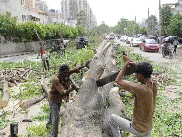 Gurgaon,Sohna Road,tree cutting