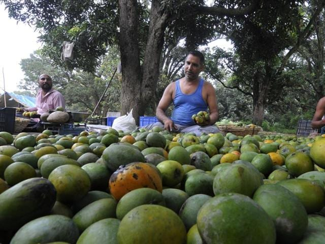 mango,Forgotten mango flavours,150-yr-old Inami Bagh