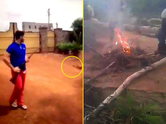 Video grabs show a dog being shot and three puppies being burnt alive in Hyderabad.