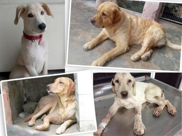 Abandoned dogs looking for loving homes