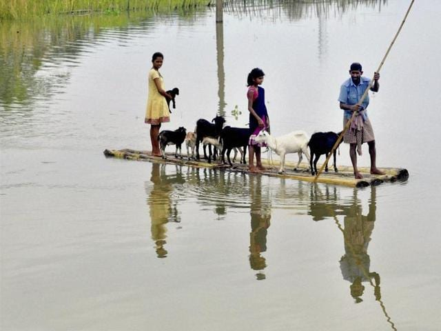 Villagers along with their cattle wade through a raft from the flood affected village of Murkata in Morigaon district, Assam.