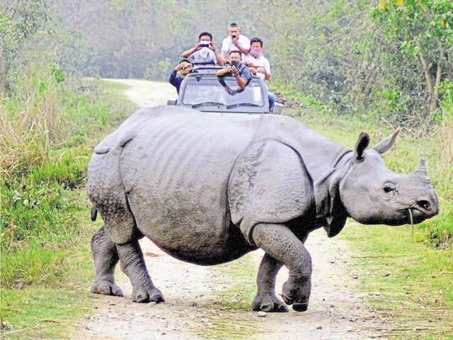 Tourist watch a rhino during a safari in Kaziranga national park in Assam.