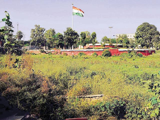 Wild growth covering Rajindra Lake in Patiala.