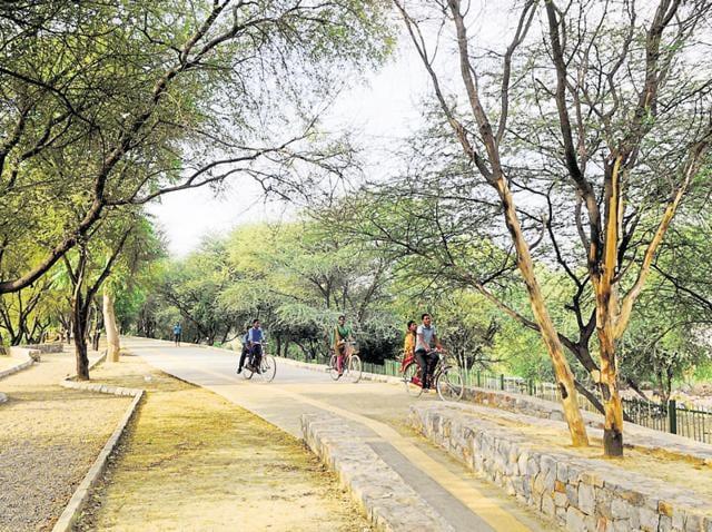 Gurgaon,Chakkarpur bundh,eco-restoration project