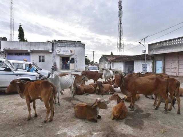 Gujarat violence