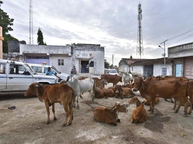 Bharatiya Gau Raksha Dal,Dadri,anti-cow offences