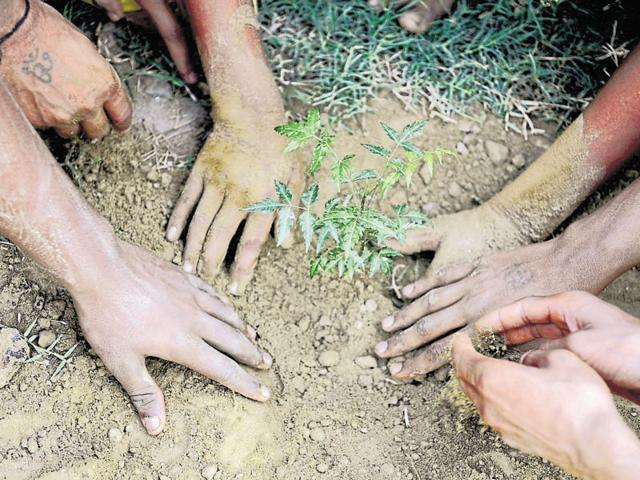 A tree-planting campaign in Noida in June 2016. How much environment should India sacrifice for industrialisation? A legislation sparks of debate.