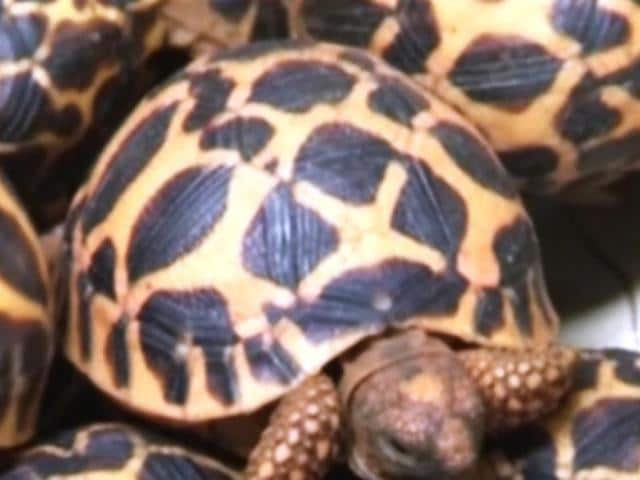 Malaysia,Indians held,turtles