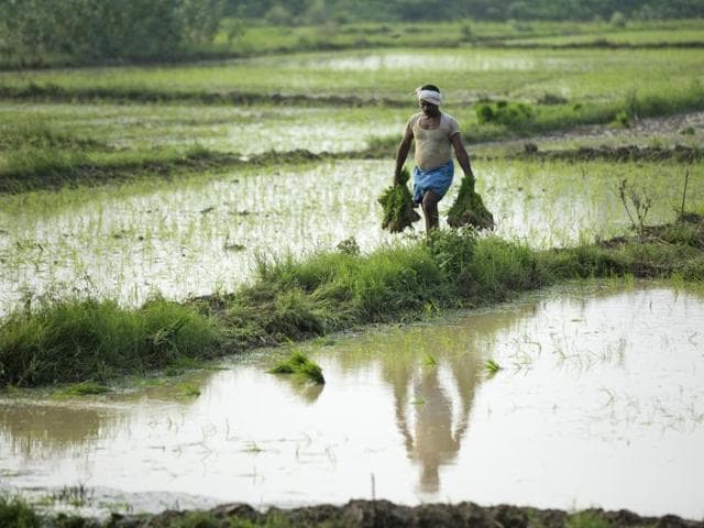 India's GDP,Indian economy,India's farm sector