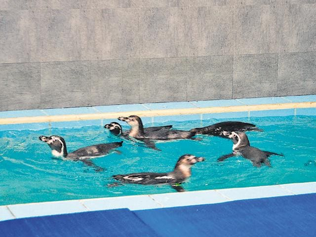 It was while revising the project that the BMC planned to procure the eight penguins.