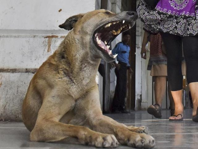 Stray dogs in Kerala have bitten over hundred thousand people in the past one year.
