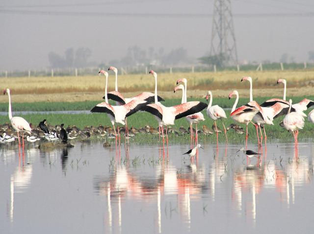 Image result for Sultanpur National Park