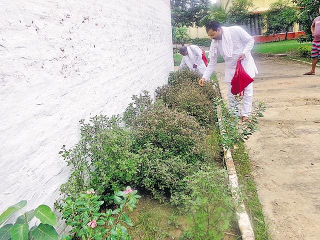 The convicts plucking tulsi leaves from the prison's backyard.