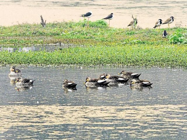 NGT sought an explanation on July 22 in an order on a contempt petition filed by a Noida environmentalist Anand Arya.