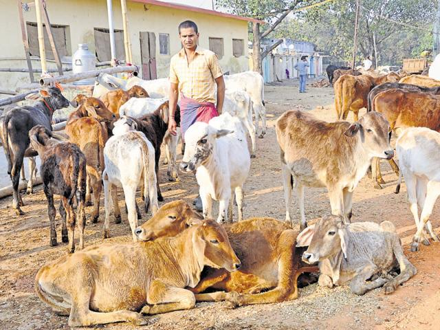 VHP claims to have saved 40,000 cows in Madhya Pradesh since 2009.