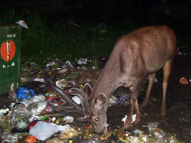 Glass and plastic bottles can injure the animals, and if consumed,they might fall fatally ill.